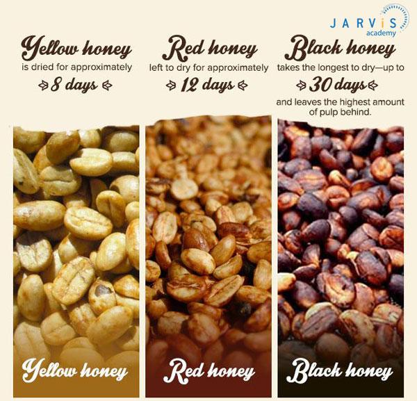 Các loại cafe chế biến honey